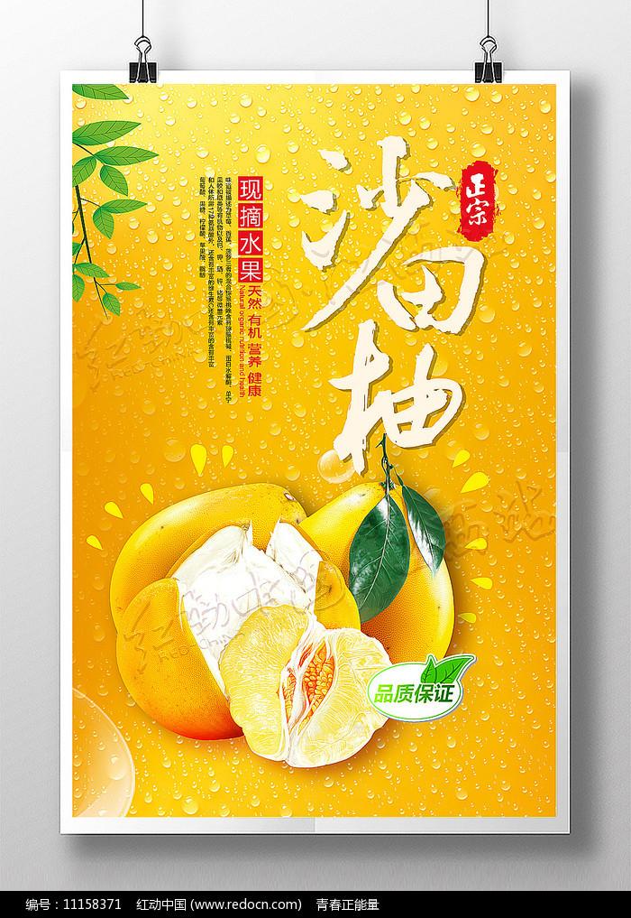 正宗沙田柚现摘柚子海报图片