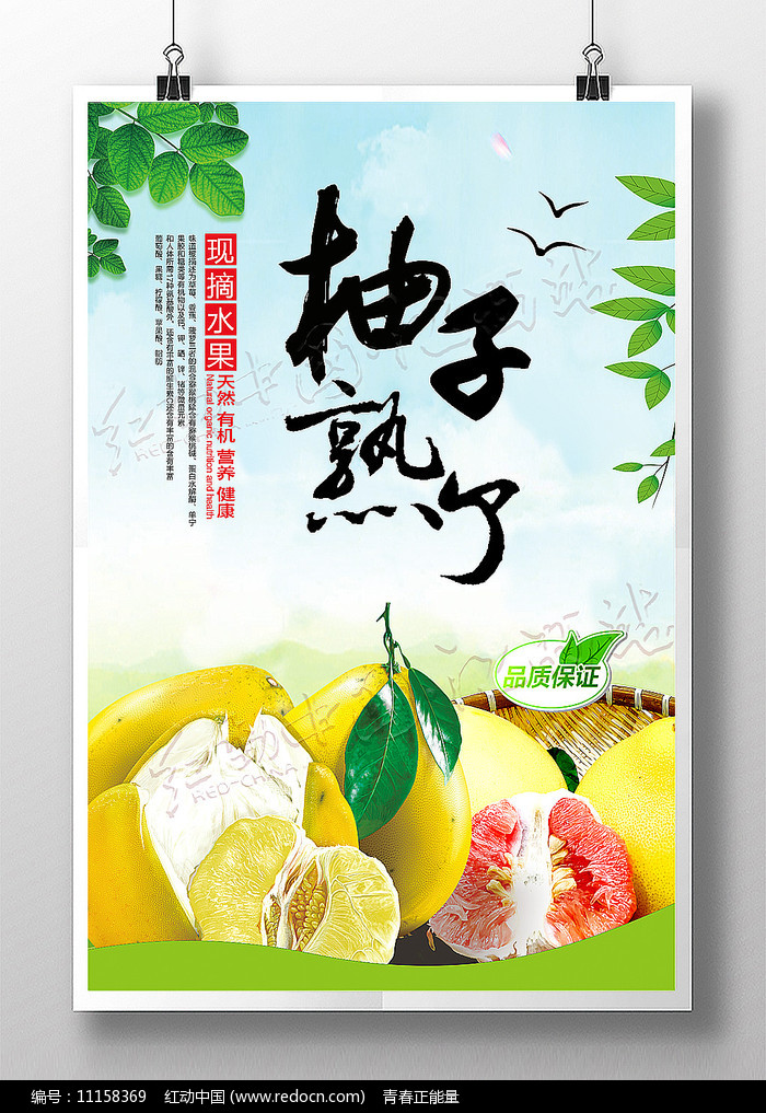 柚子熟了农民丰收节宣传海报图片