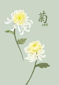 原创菊花手绘