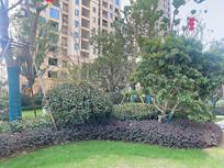 住宅小区绿化带组团植物