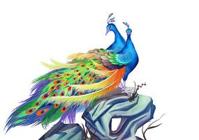 原创手绘动物中国风两只站在假山上的孔雀