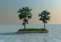 热带植物 牙买加箬棕3D模型