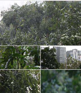 下雨暴雨4K高清实拍视频素材