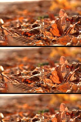 枯萎的落叶高清实拍视频素材