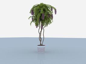 類似狐尾蘭3D模型