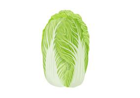 原创手绘小清新写实卡通一颗成熟新鲜的白菜