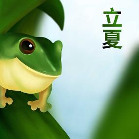 原创二十四节气立夏青蛙