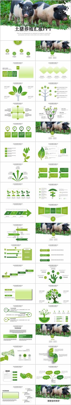 生态农业土猪养殖工作动态ppt