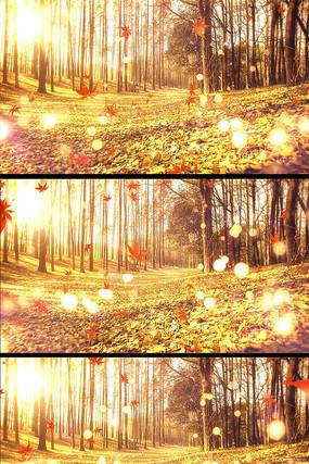 秋天落叶唯美秋天背景视频