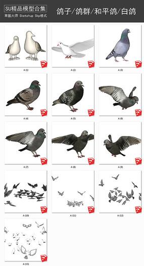 鸽子鸽群和平鸽白鸽信鸽su模型