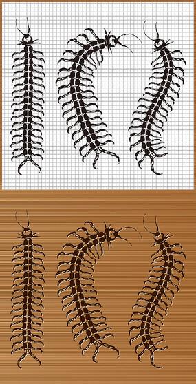 毒蜈蚣矢量图案