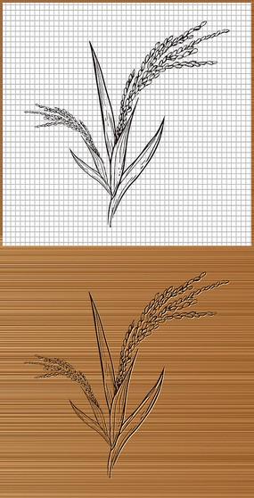 水稻矢量图