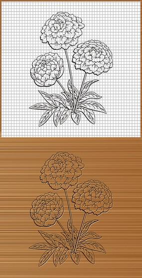 菊花矢量图