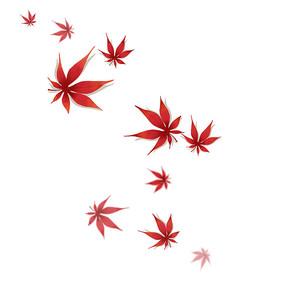 秋天落叶枫叶树叶