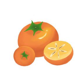 手绘秋天柿子元素