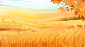 秋日金色的麦田风景