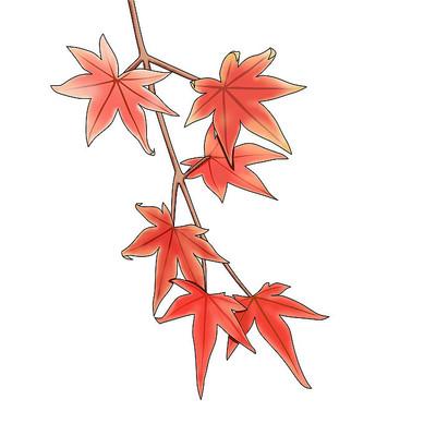 秋天枫叶元素