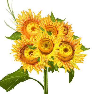 六朵黄色秋天手绘向日葵