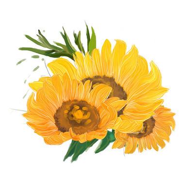 三组黄色手绘向日葵花瓣