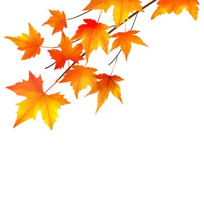 秋天枫叶树元素
