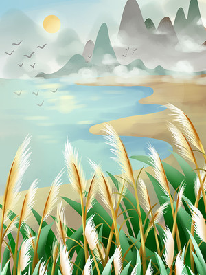 白露风景芦苇荡