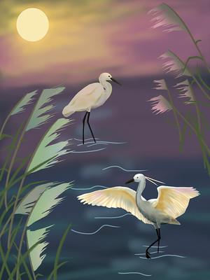 白鹭 芦苇 唯美