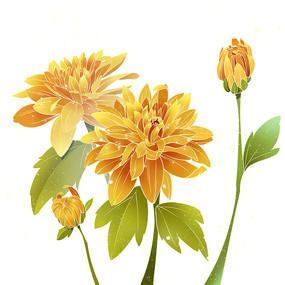 重阳节国潮写实菊花植物PNG素材