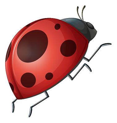 卡通红色七星瓢虫
