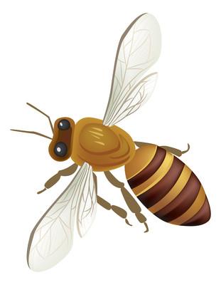 手绘卡通蜜蜂动物元素