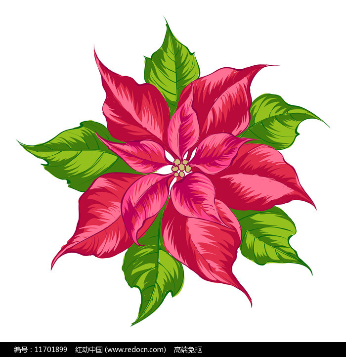 一朵红色花朵图片