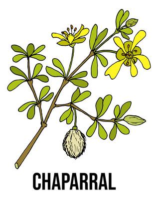 查帕拉尔元素