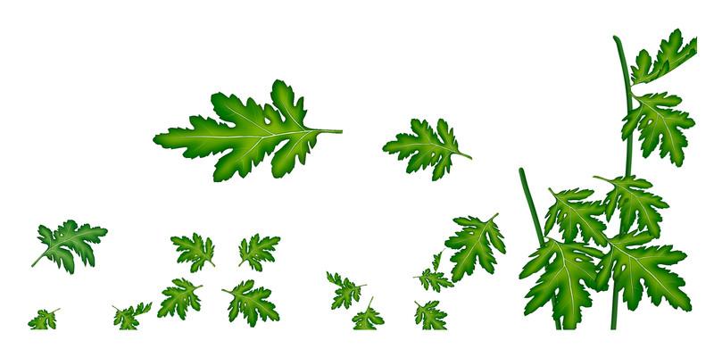 手绘卡通绿色的植物叶子