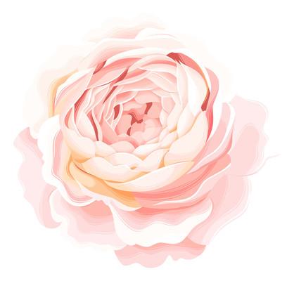 一朵淡粉色的花朵