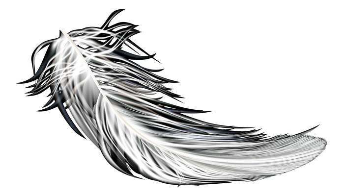 高清黑白羽毛图片