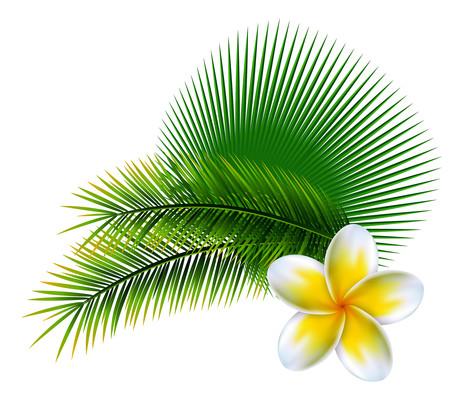 热带夏季绿叶花朵