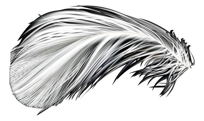 一片羽毛PNG图片