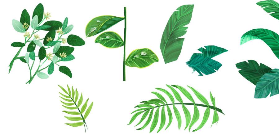 卡通手绘植物叶子绿叶免抠png