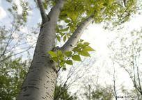 清新的树木树干风景
