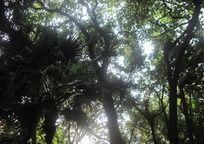 葱葱郁郁树木