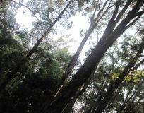 黑森森林子