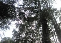 墨绿黑树影