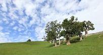 草地 树木 蓝天