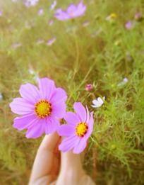 草丛花朵特写