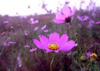 草丛中的紫色花朵特写