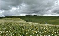 乌云下的草原野花盛开