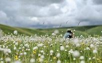 野花盛开的草原