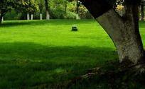 春天的嫩绿草坪