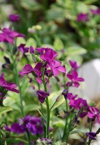 一簇浪漫唯美的紫色小花