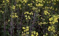 一片明艳唯美的小黄花