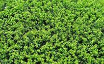 植物底图背景素材